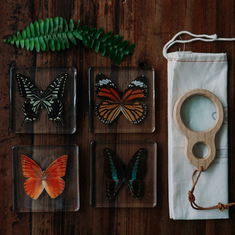 Butterfly Specimen Sets