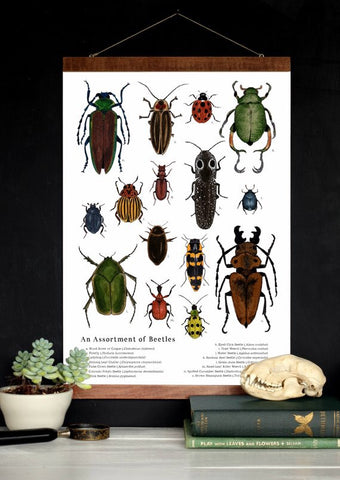 An Assortment of Beetles