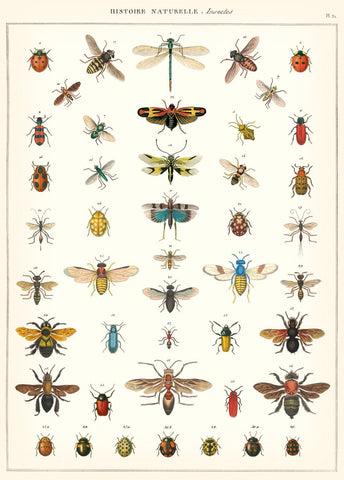 Insects Natural History Poster