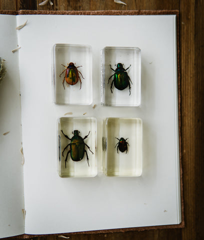Insects Specimen Bundle - Beetles