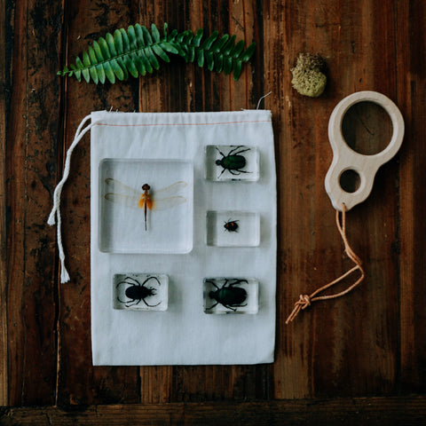 Insects Specimen Bundle - Dragonfly and Beettles