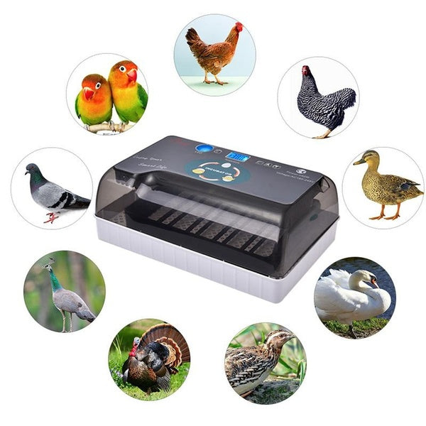 Portable Household Automatic Hatching Incubator Digital Temperature Control With LED Light For Home Use