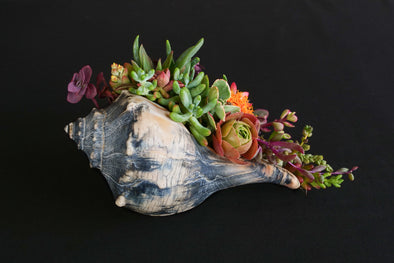 Signature Whelk SeaGarden - Dark