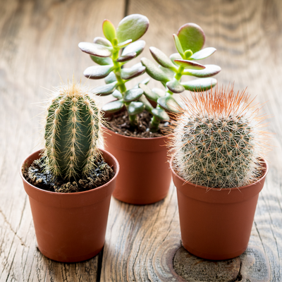 6 Tips for Winter Houseplant Care
