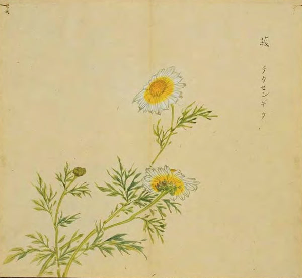 "E, the object plant of the poem Liao E, has another name ""holding mother Hao"". (Image from Ancient Paintings of Famous Items in Classic of Poetry by Japanese scholars in Edo period.)"