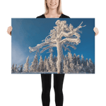 Load image into Gallery viewer, Frozen Finnish Tree by Alan Grubelić