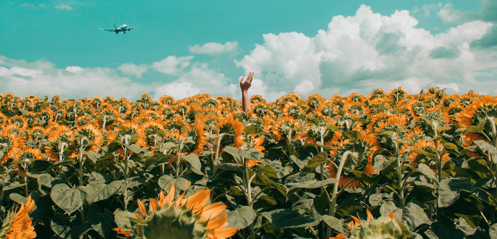 Header image of hand reaching out of a sunflower field