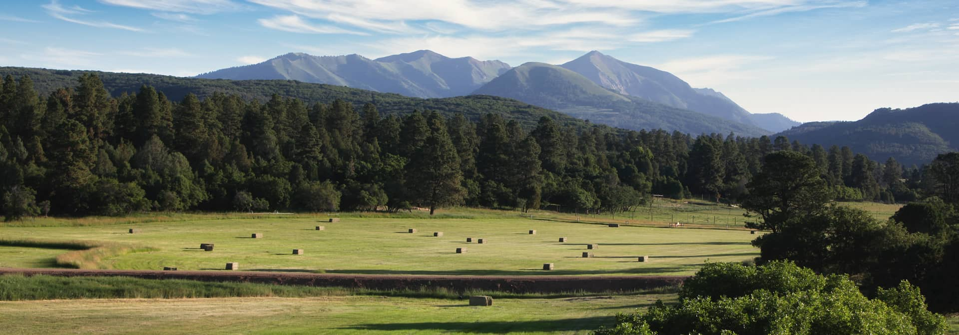 The quiet valley where we raise our Wagyu cattle.