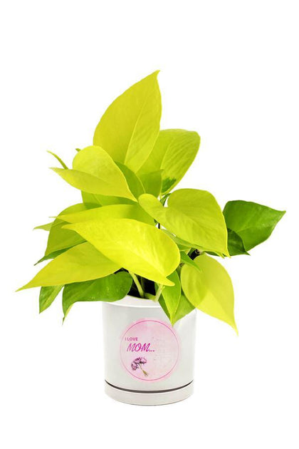 Neon Pothos Plant potted in a  Mothers Day Customized Pot.