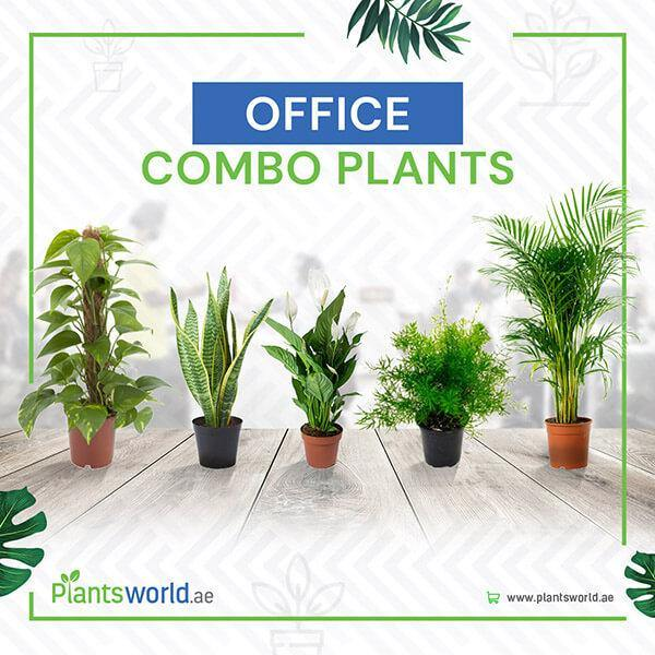 Office Combo Plants
