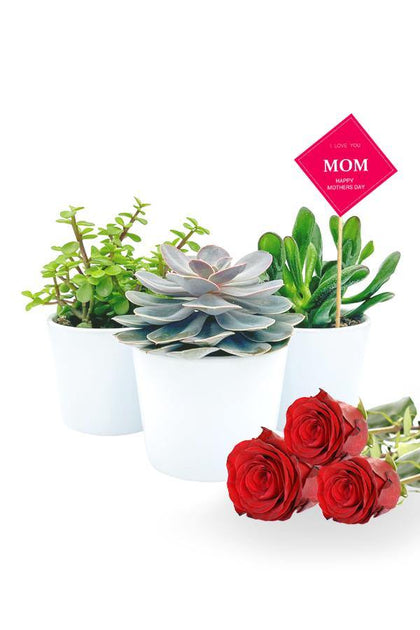 A combo of 3 succulents in white  pots along with 3 red roses and a Mothers Day Quote.