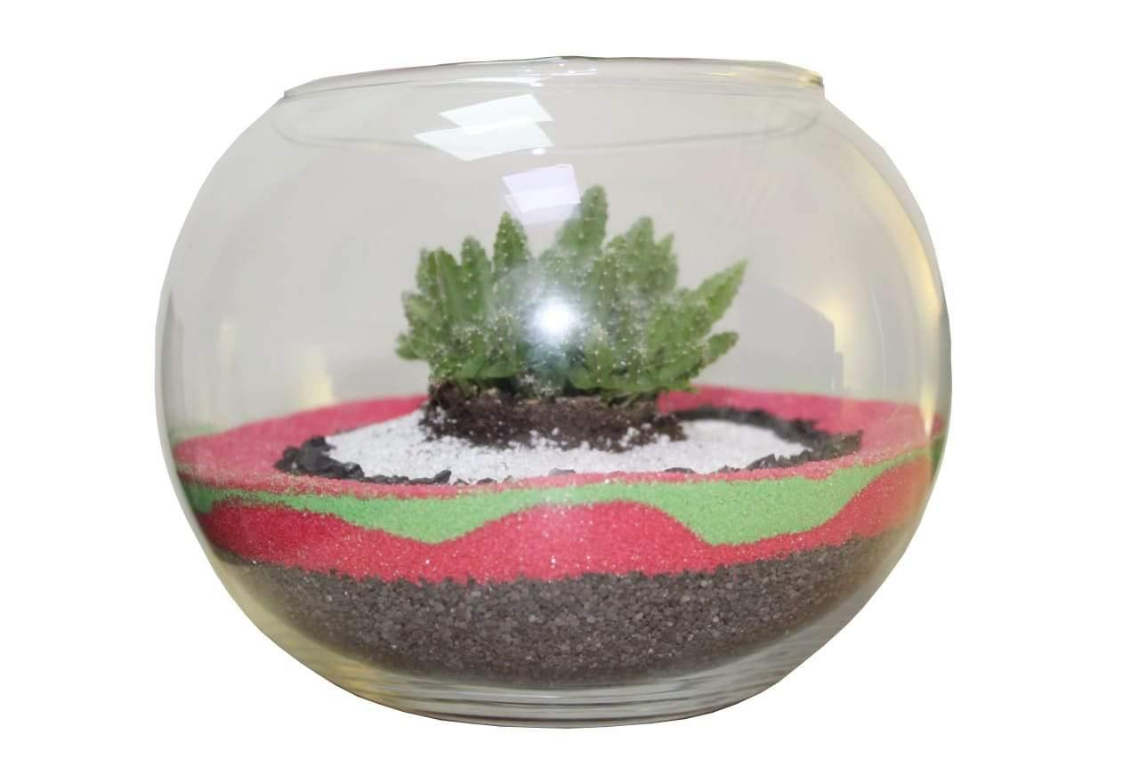 Terrarium Succulent Plants Kit with coloured stones in glass globes