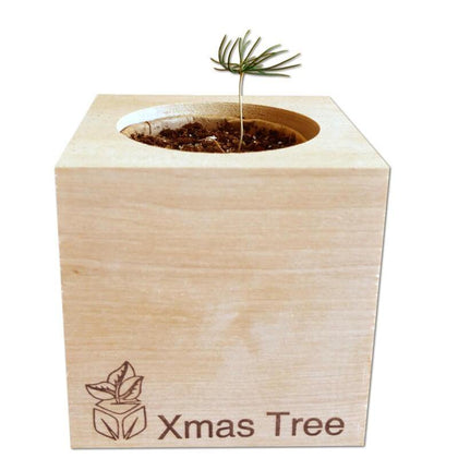 christmas-tree-ecocubes-online-in-dubai-uae