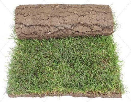 Outdoor plants online in dubai-uae Natural-Grass-Carpet-Roll-Mexican-Variety