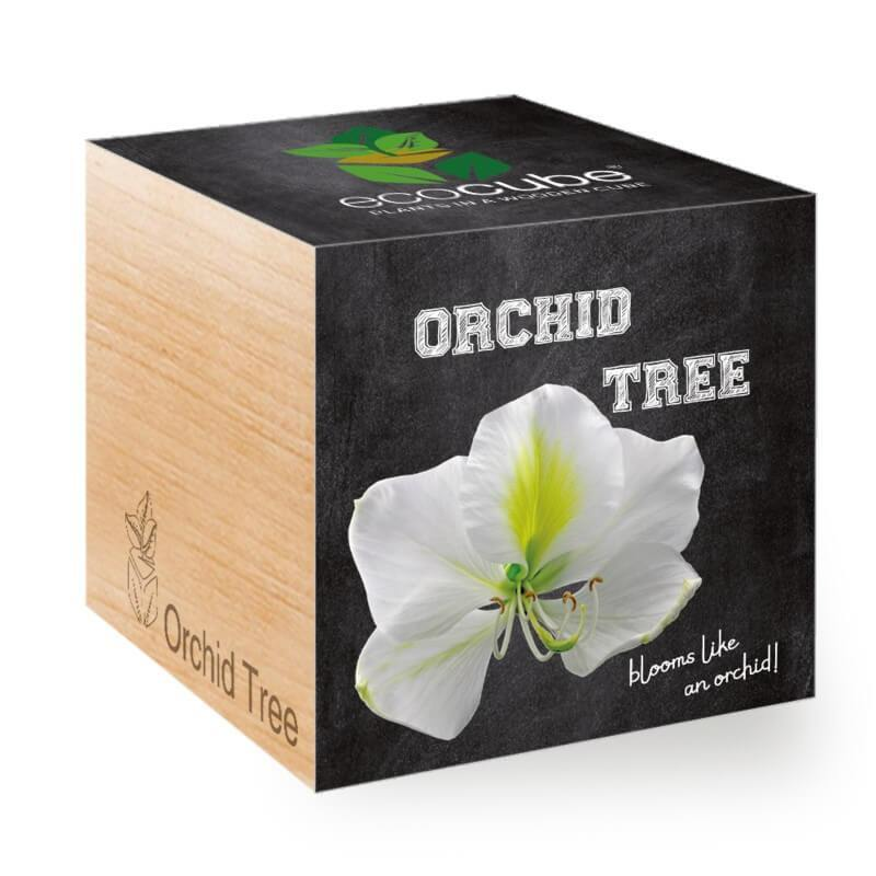 orchid-tree-ecocubes-online-in-dubai-uae