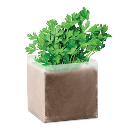 Outdoor plants online in dubai-uae Parsley-apium