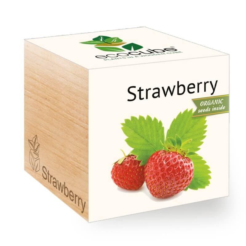 strawberry-ecocubes-online-in-dubai-uae