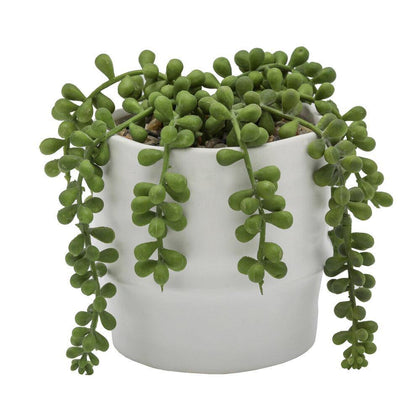 String Of Pearls-succulent