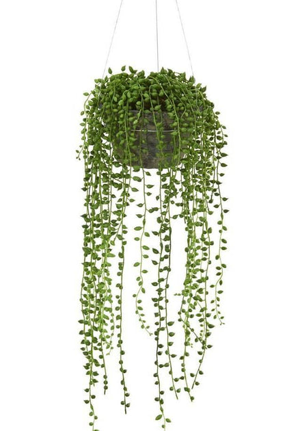 Indoor plants online in dubai-uae-String Of Pearls-succulent