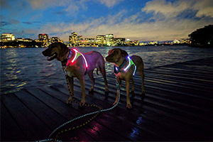 Lighthound LED Dog Harness