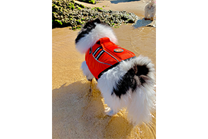 dog_life_jacket_orange_001