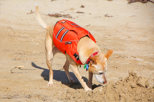 dog_life_jacket_orange