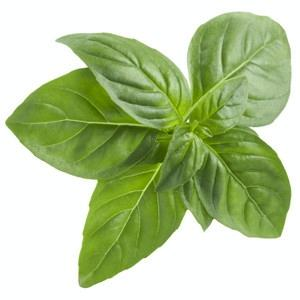 Basil - door2doorfresh.com
