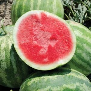 Watermelon - Seedless - door2doorfresh.com
