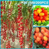 Fruit Seeds Rainbow Tomato Colorful Rare Vegetables Seed Good Quality Plant Seeds Colorful Tomatoe 20/100/200PCS