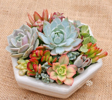 Load image into Gallery viewer, 100pcs rare succulent plant seeds garden home decoration easy to plant potted multicolor flower seeds garden bonsai seeds