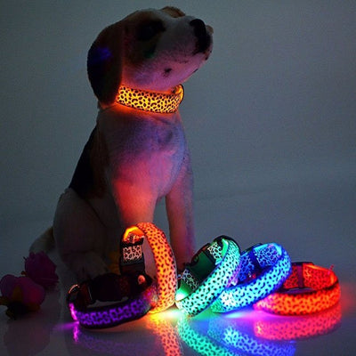 LED Pet Dog Colorful Collar - Posh Pooch Accessories