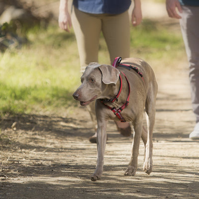 Pet Dog Walking Harness - Posh Pooch Accessories