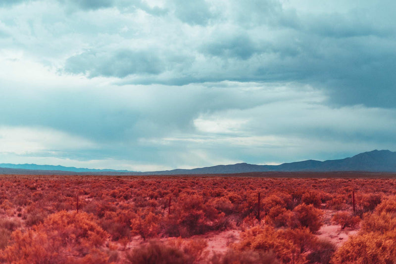 New Mexico Infrared