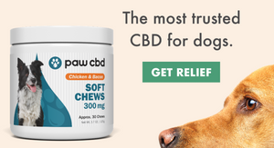 Should You Try CBD for Your Pet?