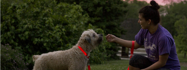 Dog helps detect invasive rabbits around the World