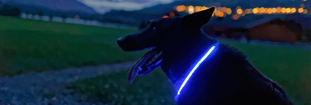 Best Light Up Dog Collar
