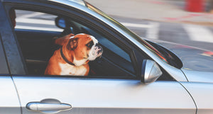 Driving Safely With Your Dog in the Car