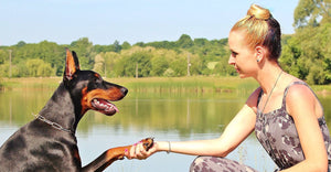 Young Dog Training Tips