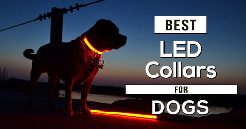 best-led-dog-collar