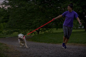 Leashes & Head Collars - LED Dog Leash
