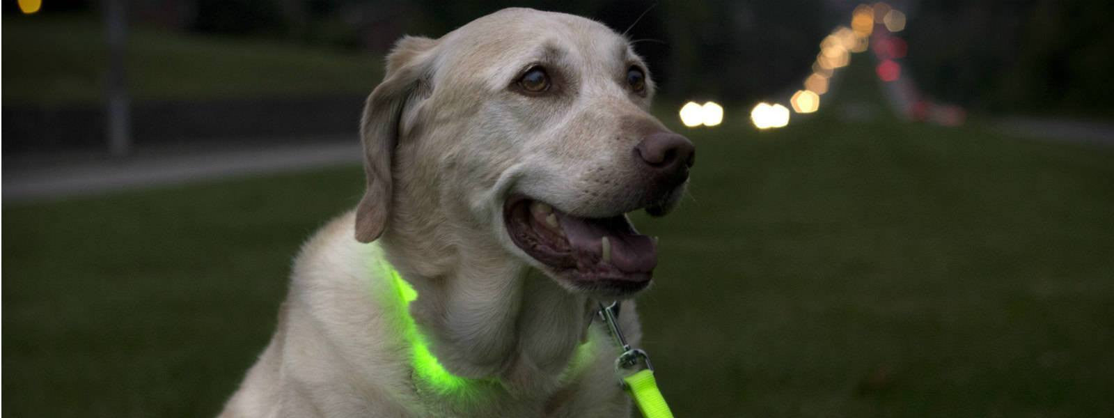 led dog collar saves dog from getting hit by cars