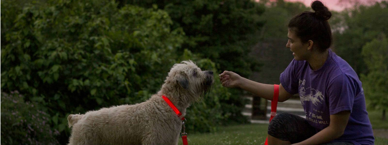 The Pet's Tech Keeps Your Dog Save With Our LED Dog Collar And Leash