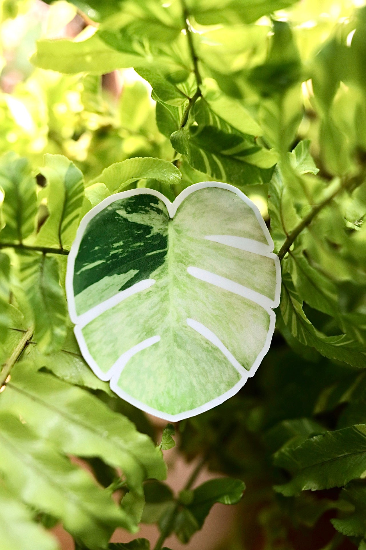 Variegated Monstera Mint Sticker