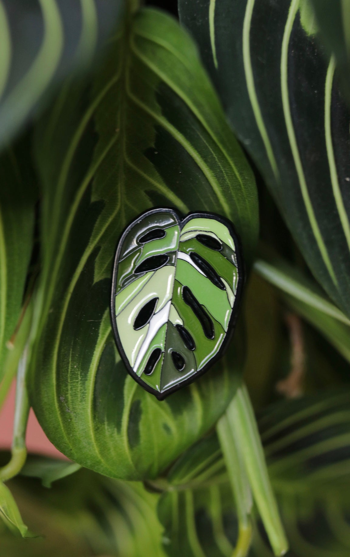 Variegated Monstera Adansonii Pin