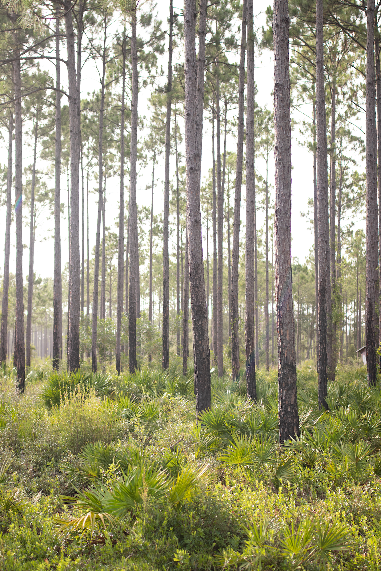 Florida Wetland Trees Print