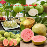20/60/120/200 PCS/bag Guava Seed,  Delicious Tropical Organic Vegetable/Fruit Seeds,  Non Transgenic Plants Bonsai Fruit Tree for Home Garden Plant Pot Food