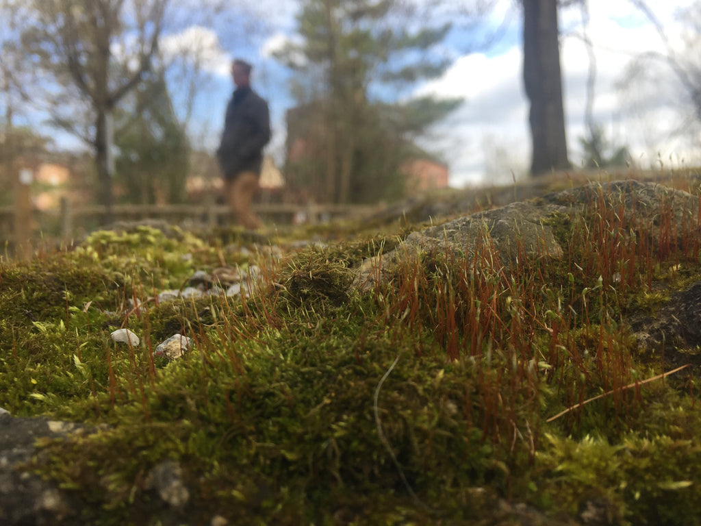 Close up of moss with trees and sky in the background