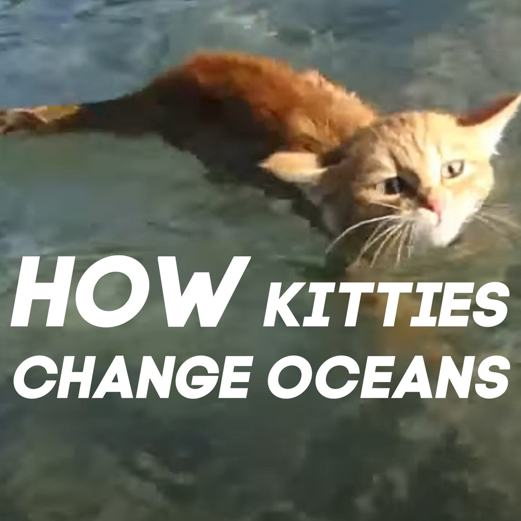 How Kitties Change Oceans