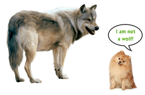 Dogs Are Not Wolves – They Adapted to Plant-Based Diet