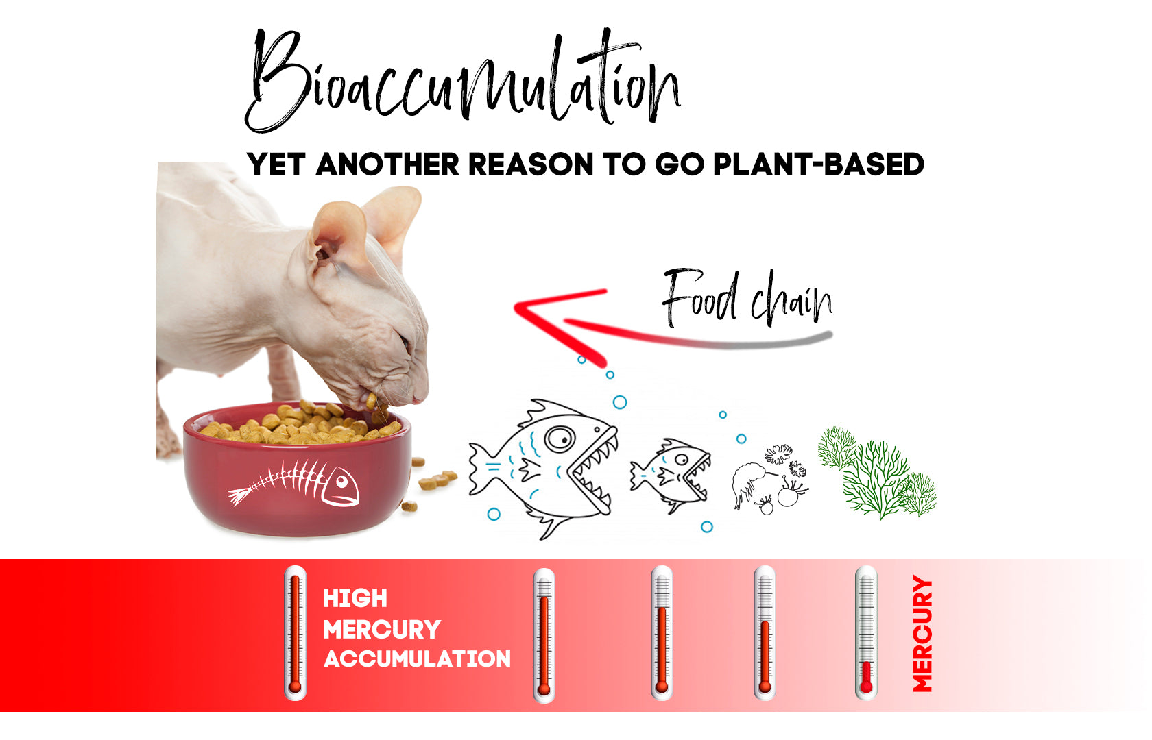 avoid toxins from bioaccumulation with vegan dog food and vegan cat food